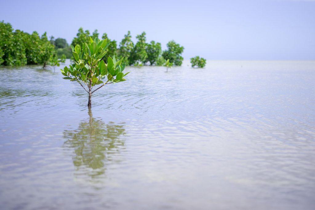 Mangrove - West Coast Mauritius
